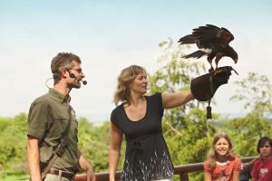 Wildparadies-Pass Erwachsene oder Jugendl. ab 12 Jahren