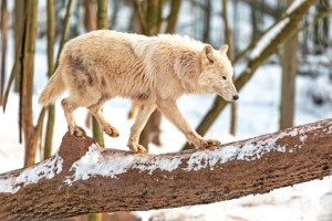 Wildparadies-Pass Winter Senioren ab 60 Jahren